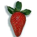 Strawberry by Linda Wright