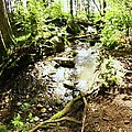 Stream At Devonian Park by Erica Rieger