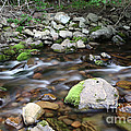 Stream In Nova Scotia by Ted Kinsman