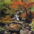 Stream Near Glengariff, Co Cork, Ireland by The Irish Image Collection