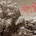 Street Scene Merry Christmas by Skip Willits