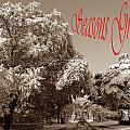 Street Scene Seasons Greetings by Skip Willits