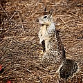 Strike A Squirrelly Pose by Eric Tressler