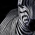 Striped by Preethi Mathi