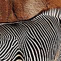 Stripes by Christy Phillips