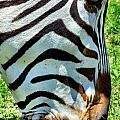 Stripes by Art Dingo