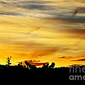 Stripey Sunset Silhouette by Kaye Menner