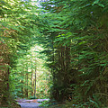 Stroll Through The Quinault Rain Forest by Heidi Smith