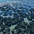 Stromatolites by Dirk Wiersma