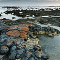 Stromatolites In Australia by Bob Gibbons