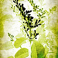 Study In Green by Judi Bagwell