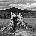 Stump In A Field by Greg Matchick