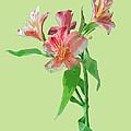 Stylish Florals by Karen Nicholson