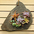 Succulents by Dave Mills