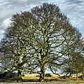 Suffolk Winter Landscape by Darren Burroughs