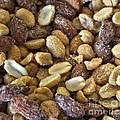 Sugar Coated Mixed Nuts by Gwyn Newcombe