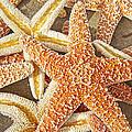 Sugar Cookies  by Betsy Knapp