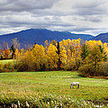 Sugar Hill Road New Hampshire by Nancy Griswold