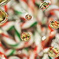 Sugar On Canes by Traci Cottingham