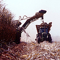 Sugarcane Harvest by Photo Researchers