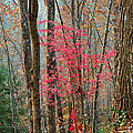 Sumac In Morning Light At Cumberland Falls State Park by Greg Matchick