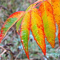 Sumac Leaves After The Rainfall by Sean Griffin