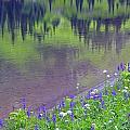 Summer Abstract At Tipsoo Lake by John Chao