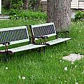Summer Bench And Dandelions by Lorraine Devon Wilke