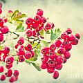 Summer Berries by Angela Doelling AD DESIGN Photo and PhotoArt