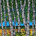 Summer Birches by Tracy Levesque