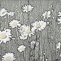 Summer Daisies by Kathy Sampson