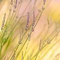 Summer Daydream by Bobbie Climer