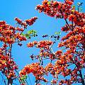 Summer Flowers  by Sumit Mehndiratta