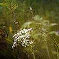 Summer Grasses by Ellen Heaverlo