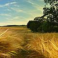 Summer Harvest by Kevin Askew