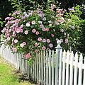 Summer In Maine by Mary Ellen Mueller Legault