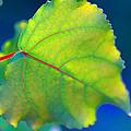 Summer Leaf by K Toney