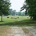 Summer Pasture by Cyndi Brewer