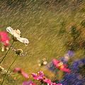 Summer Rain by Darren Fisher