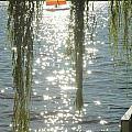 Summer Sail by Kelly Morrow