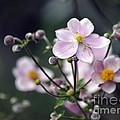 Summer Softness by Living Color Photography Lorraine Lynch