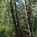 Summer Trail by Jim Sauchyn