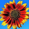 Summerflower by Benjamin Yeager