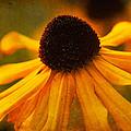 Summers Bloom by Randy Wood