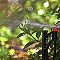 Summertime Refreshment by Carolyn Marshall