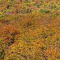 Summit Peak Autumn 15 by John Brueske