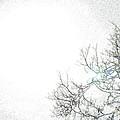 Sun 2 by Lenore Senior