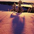 Sun Casting Shadows On Snow Covered by Natural Selection Craig Tuttle