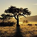 Sun Coming Up Behind A Tree In African by Axiom Photographic