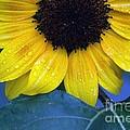Sun Flower by Ronald Grogan